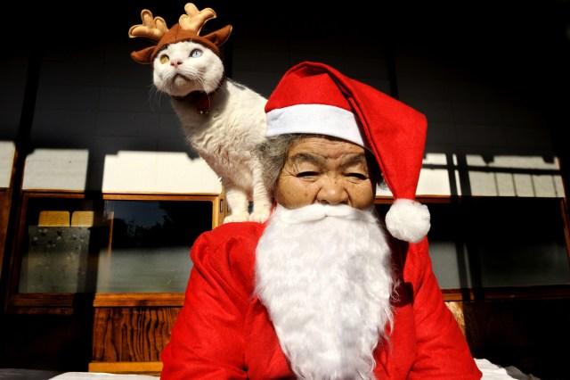 Misao The Big Mama And Fukumaru The Cat English Edition
