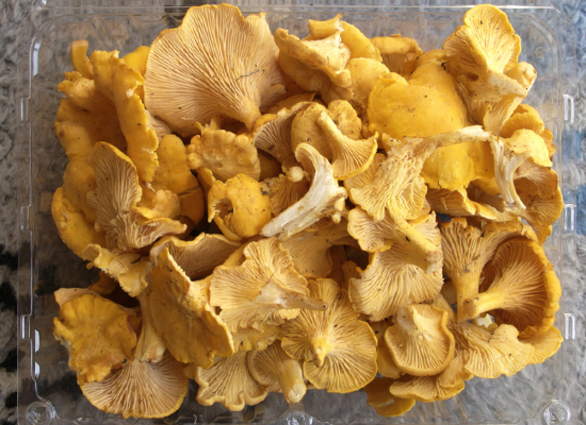 Cendawan Global: Every Type Of Mushroom You Need To Know About