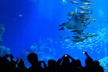 World Largest Aquarium Pinoria