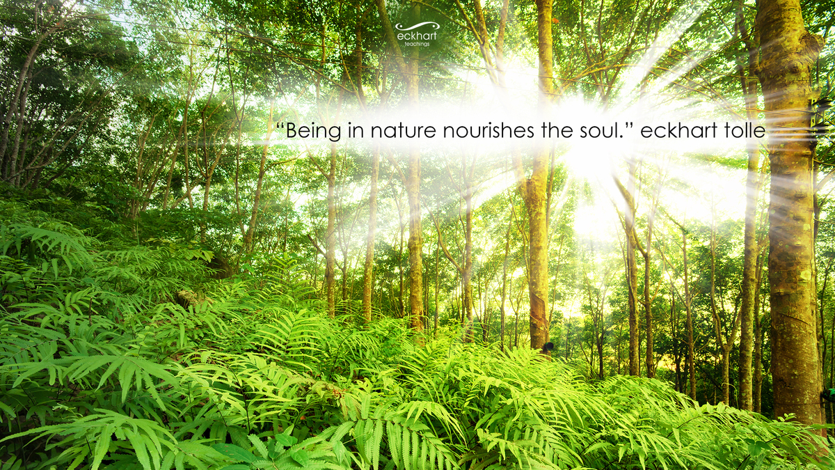 Image result for find peace in nature