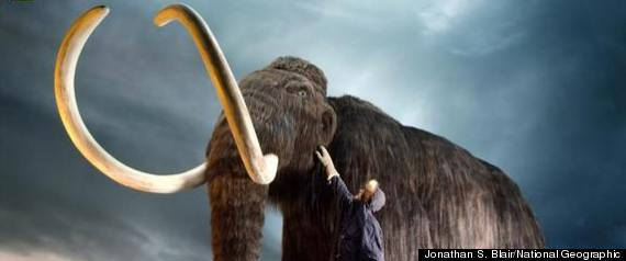 Wooly Mammoth Clone