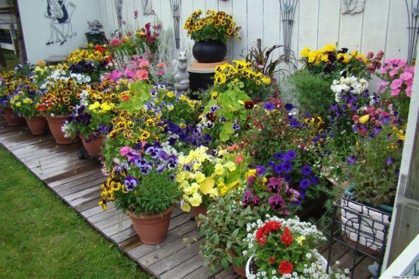 pretty container gardens