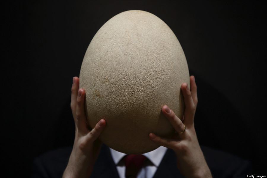 elephant bird egg auction