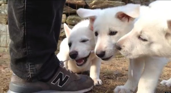 Puppy Chewing On Shoe