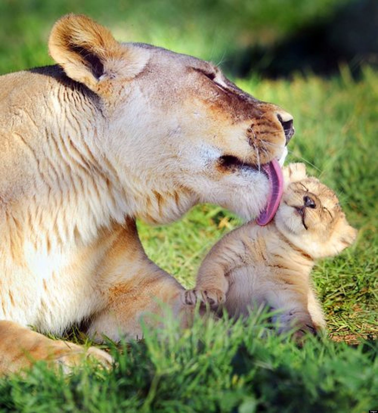 Mother S Day 18 Animals Being Good Mothers Pictures