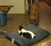 Cat Steals Dog's Bed And Dog Isn't Having It (VIDEO)
