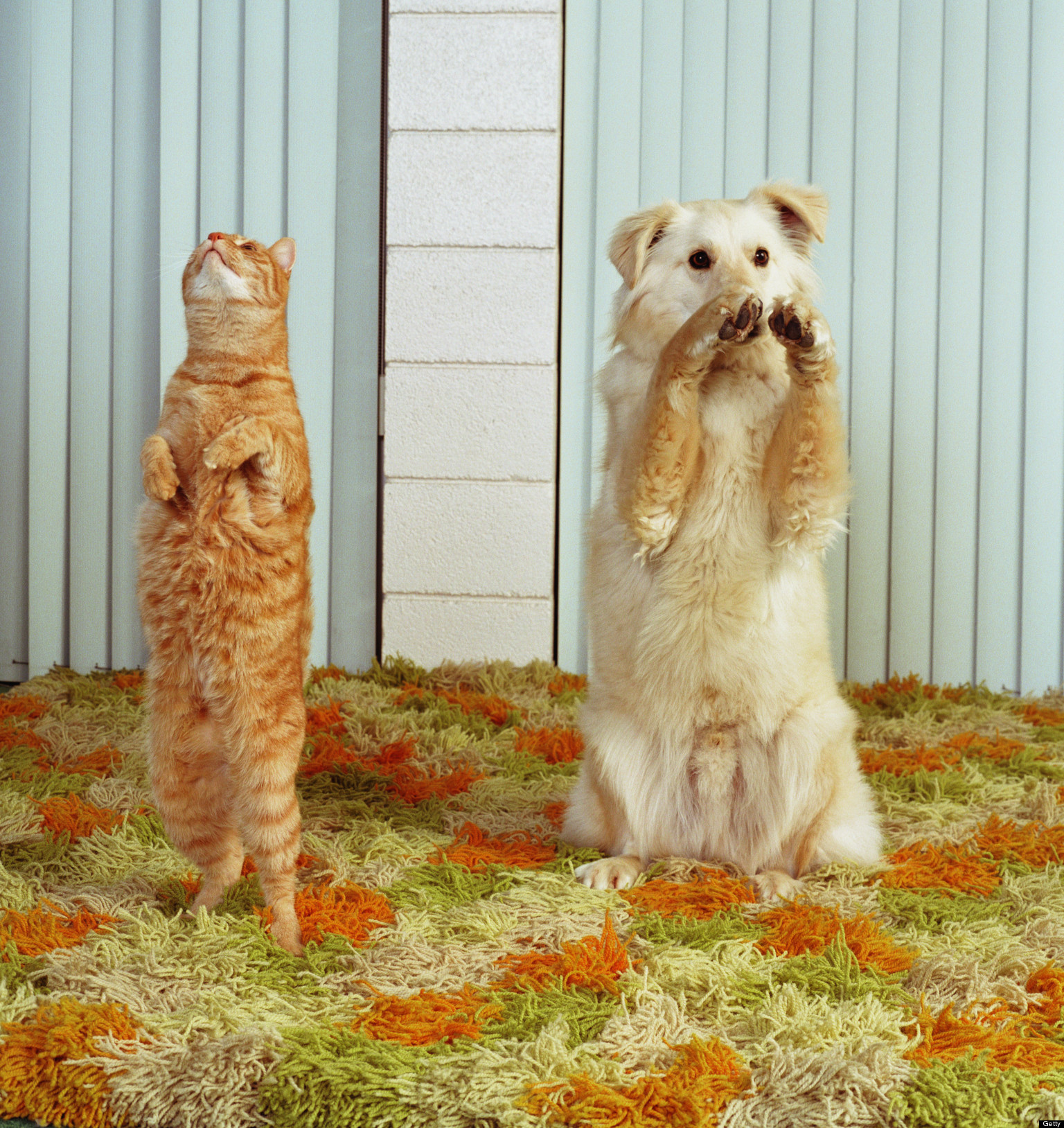 Who S Smarter Dogs Vs Cats Video