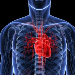 Realistic Heart Diagram Ford 5000 Ignition Switch Wiring Can We Go From Around 1 In 100 To Never Huffpost