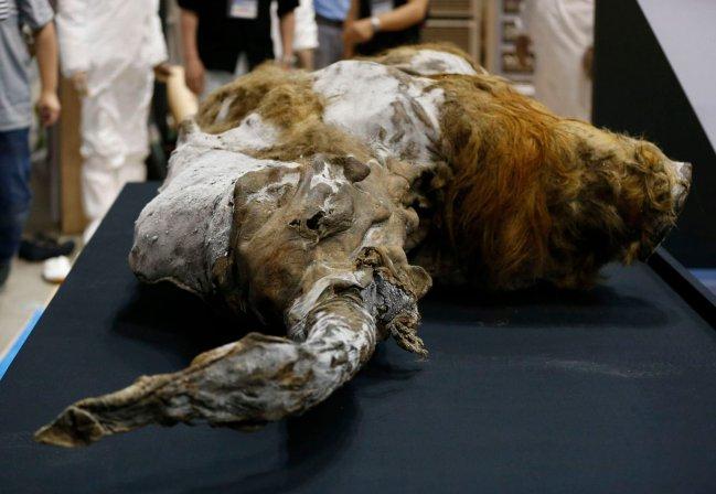 Resultado de imagen de mamut congelado