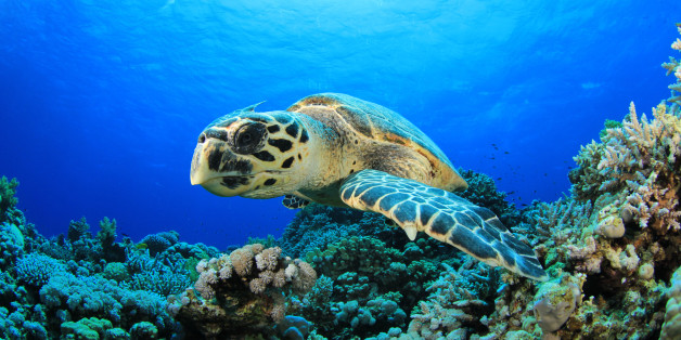 Good Evening Hd Wallpaper Chinese Restaurateur Refuses To Cook Rare Hawksbill Sea