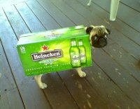 12 Pugs That Got Tricked, Not Treated On Halloween | HuffPost