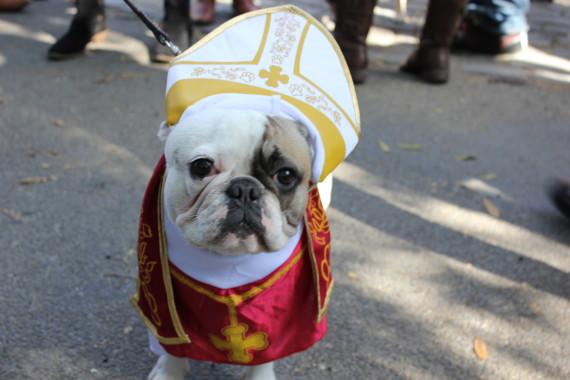 2013 NYC Halloween Dog Parade