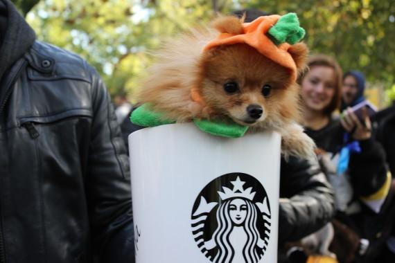 starbucks pup