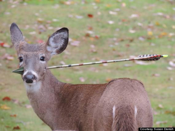 Deer with arrow in its head rescued in new jersey photos