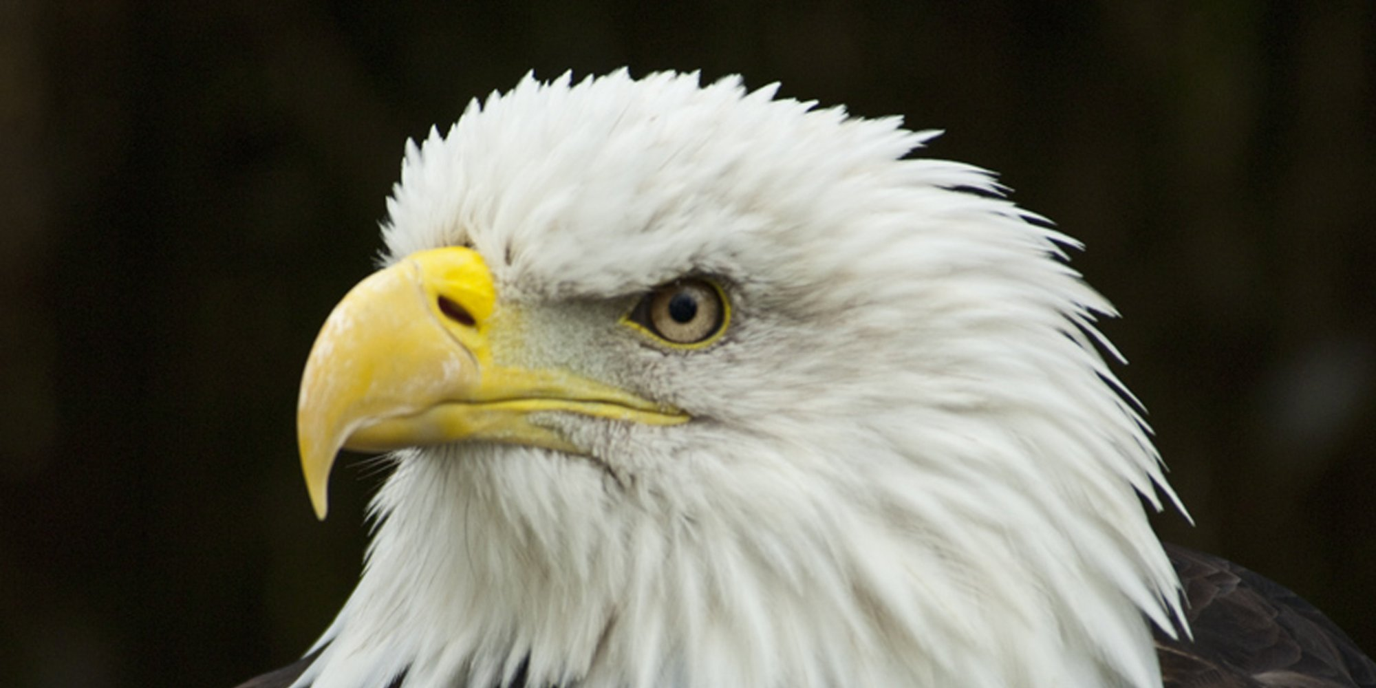 As Utah Bald Eagle Deaths Climb Scientists Look For Answers  HuffPost