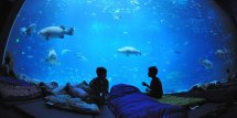 World' Coolest Underwater Lodgings Fodor'