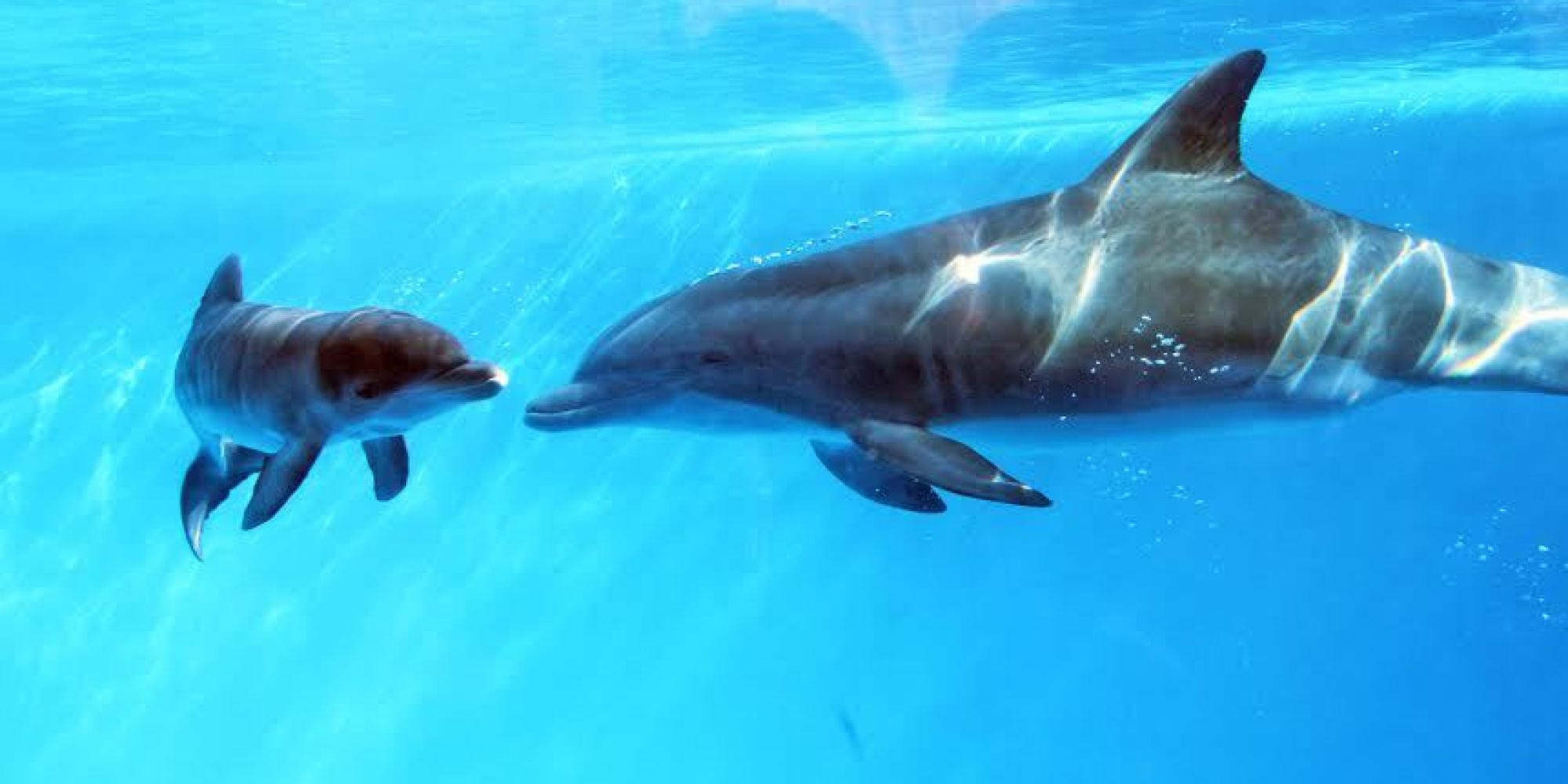 Cute Baby With Parents Wallpaper Dolphin In Captivity May Be First Discovered To