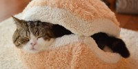 Cat Burger Pillow Is A Burger Pillow For Your Cat (PHOTOS ...