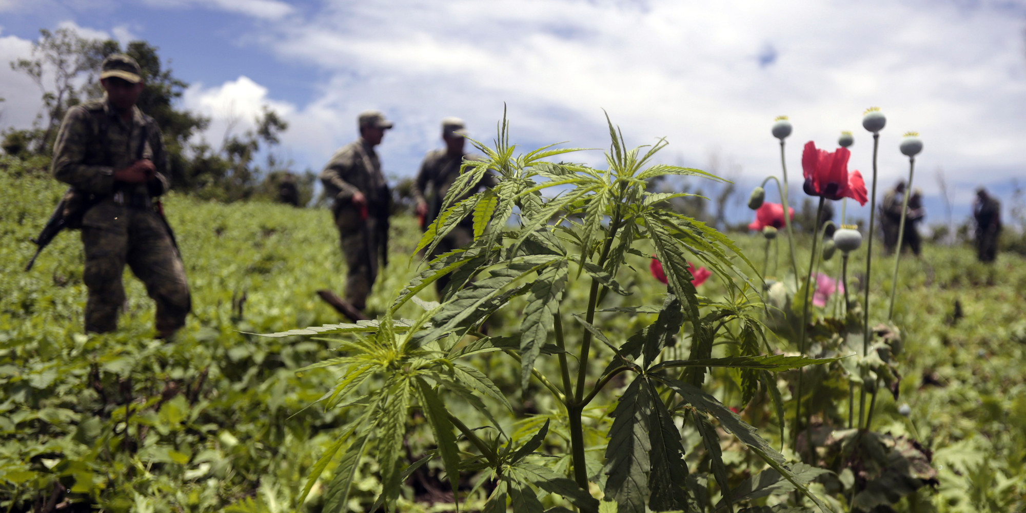 Image result for marijuana mexico