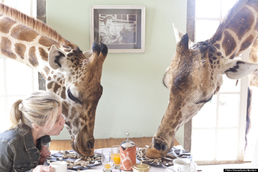 This Is The Worlds Only Giraffe Hotel  HuffPost