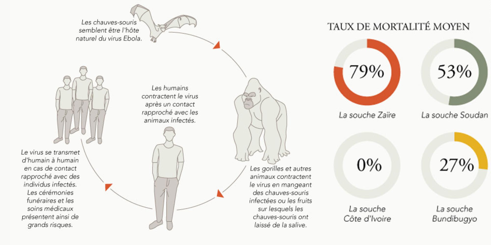 Virus Ebola Transmission Traitement Pays Concerns Le