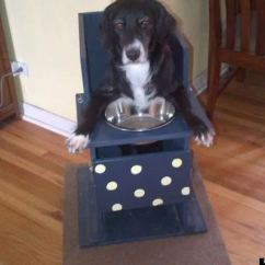Dog High Chair Steel For Hotel Rescue With Special Needs Can Only Eat From Her But Annie Sitting In Ready Mealtime