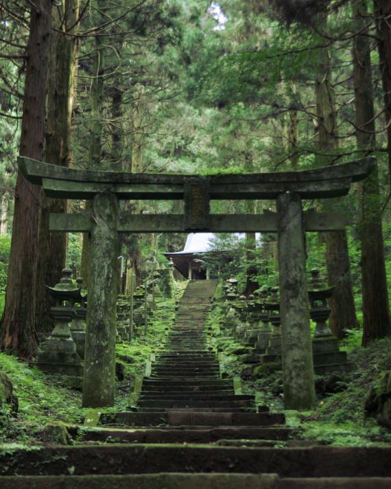 japanese forest shrine