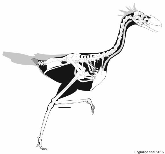 terror bird drawing