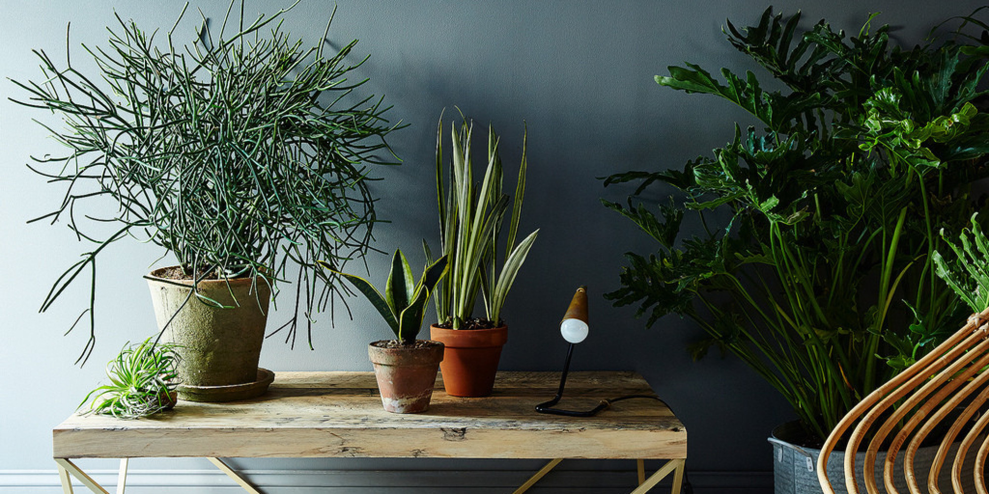 5 NoKill Houseplants for Any Home  HuffPost