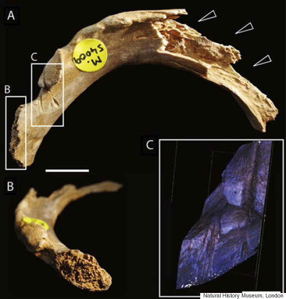early humans cannibals