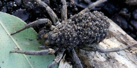 Image result for spider swarm