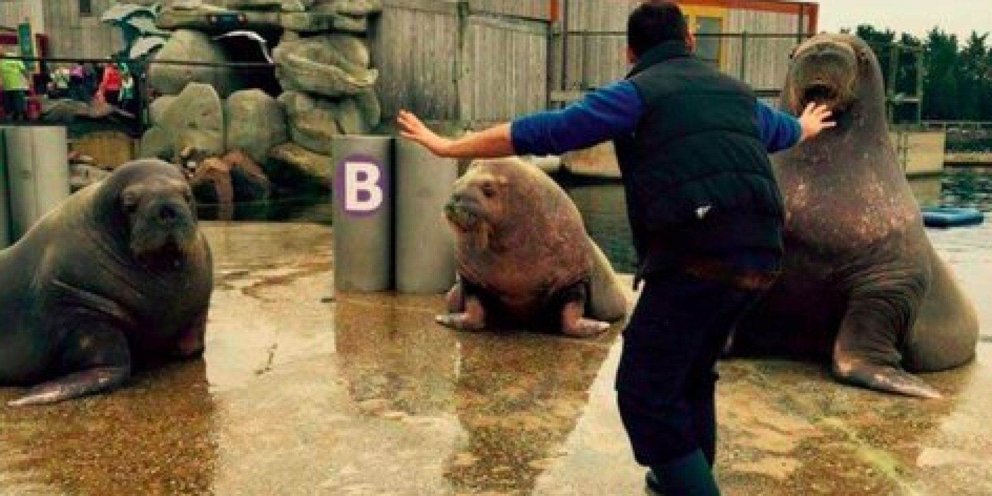 Zookeepers Are Hilariously Recreating Chris Pratt S Raptor