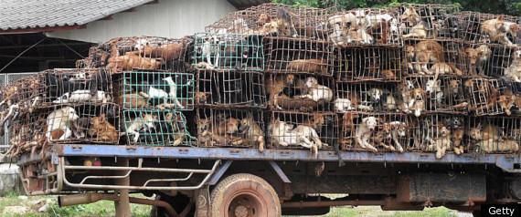 Dog Smuggle Thailand