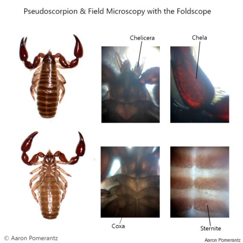 foldscope 5