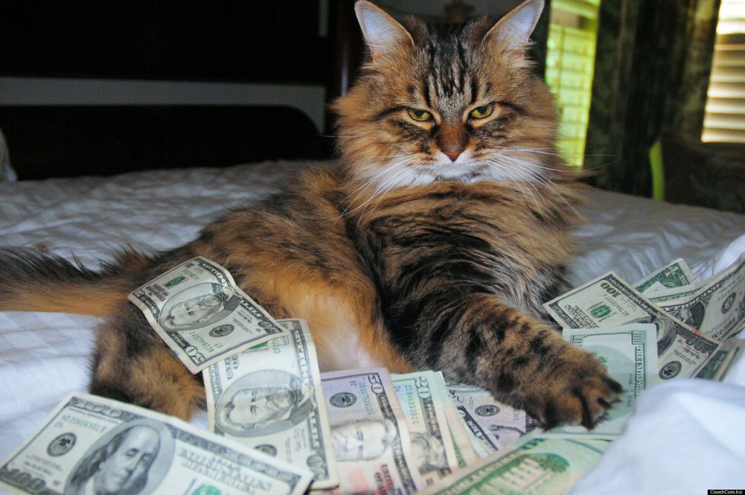 """Képtalálat a következőre: """"money cat"""""""