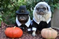 25 Pets In Pilgrim Costumes (PHOTOS)