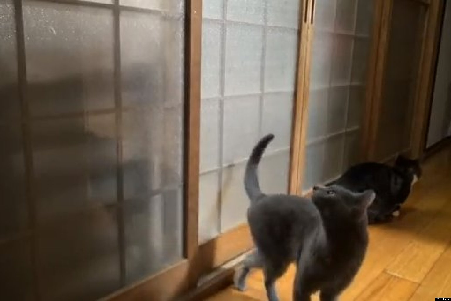 Persistent Cats Hilarious Knock On Bedroom Door VIDEO