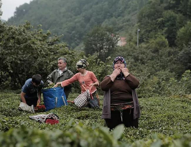 UN moves to protect whistled 'bird language' in Turkey's Black Sea region - Turkey News
