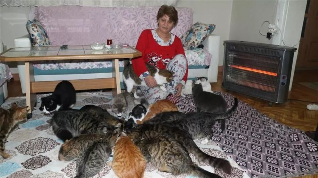 Kitty kingdom: Woman in northwest Turkey keeps house with dozens of cats