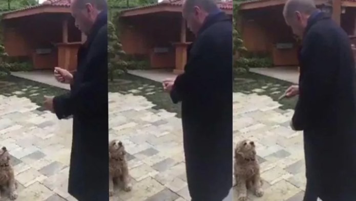 Video showing Erdoğan giving cucumber to dog goes viral