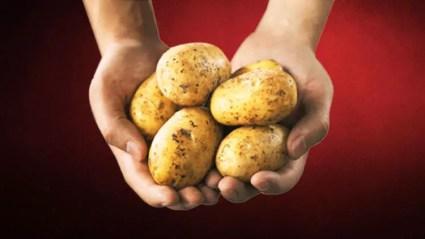 Tam Organik Kaliteli Patates Yetiştirmenin Püf Noktası ile ilgili görsel sonucu