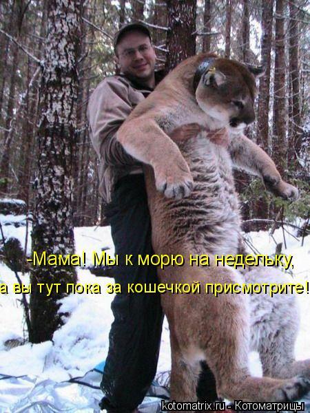 https://i0.wp.com/i.i.ua/prikol/pic/8/3/164238.jpg