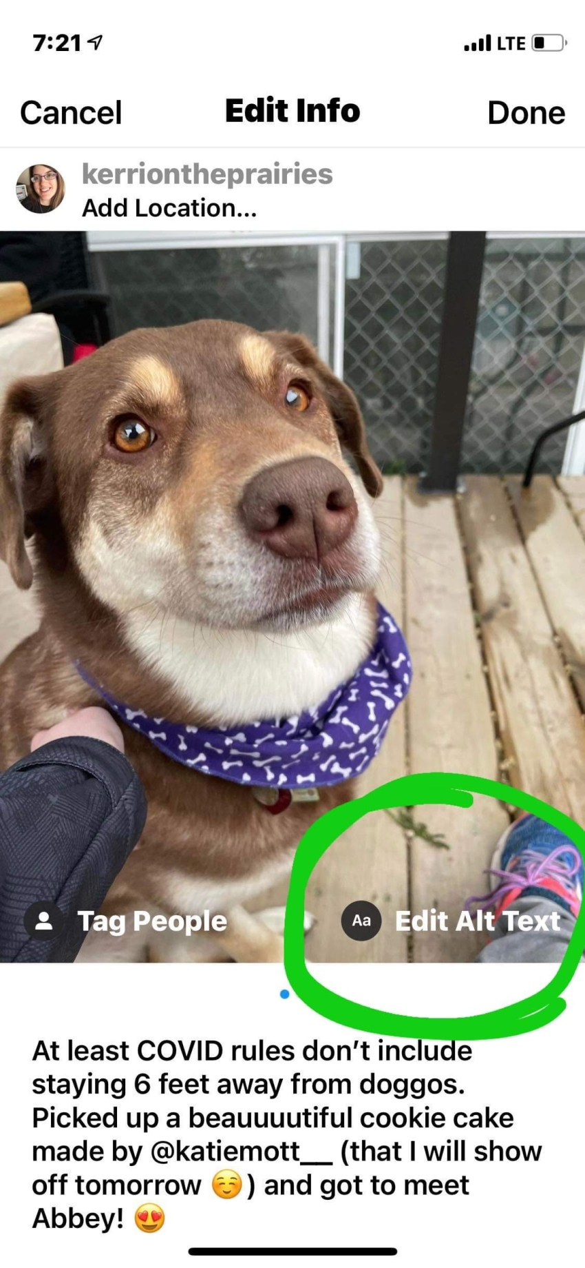 Image of my friend's dog Abbey who is medium-sized and brown and white, she is gazing toward the camera. Anyways, the whole point here is that I am telling the sighted peoplewhere the Edit alt text button is, it's circled in green.