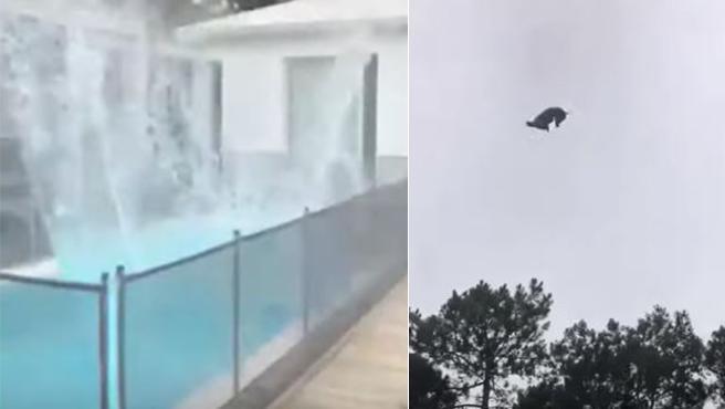 Vídeo   Maltrato animal: lanzan un cerdo desde un helicóptero a la piscina de un millonario