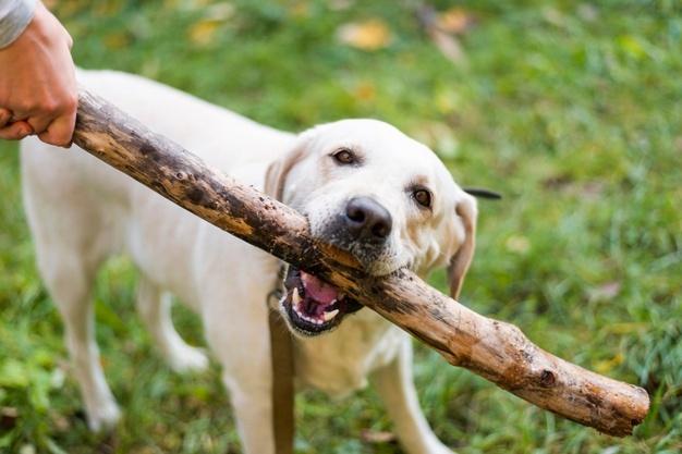 dog Fetch, dog training, dog tricks, teach your dog tricks, train dogs