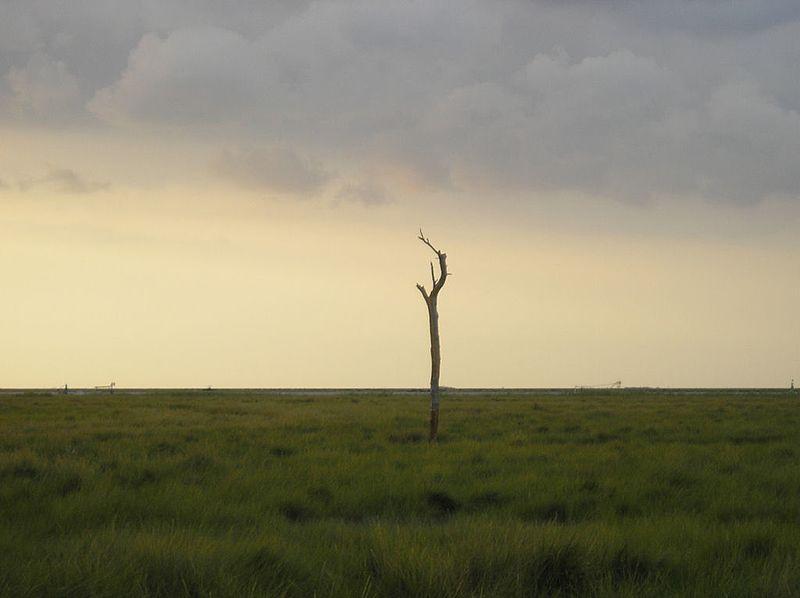 EQUO considera que la declaración de sobrexplotación del acuífero de Doñana llega tarde