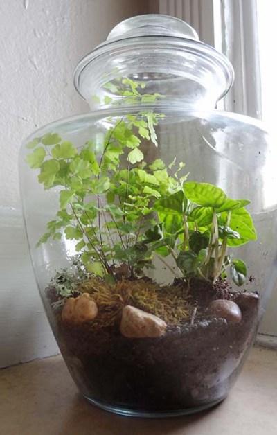 Moss-Terarium