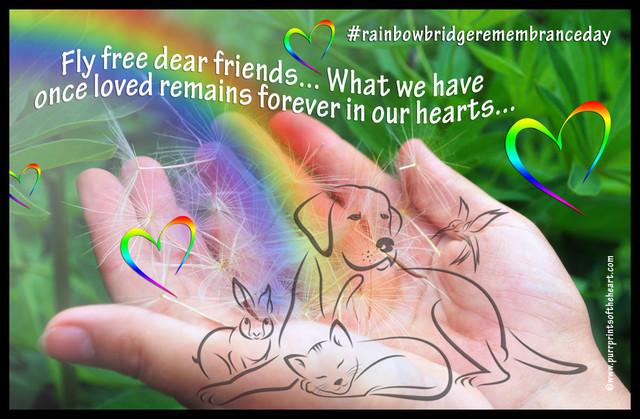 Rainbow-in-female-hands