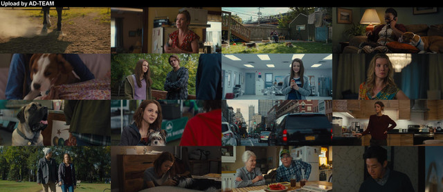 118521651-a-dogs-journey-2019-bluray-1080p-yts-lt