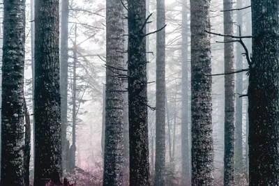 Complex and surprising effects of. Foggy Forest Trees Vintage Fall Wood Canvas Wall Art Nature Magick